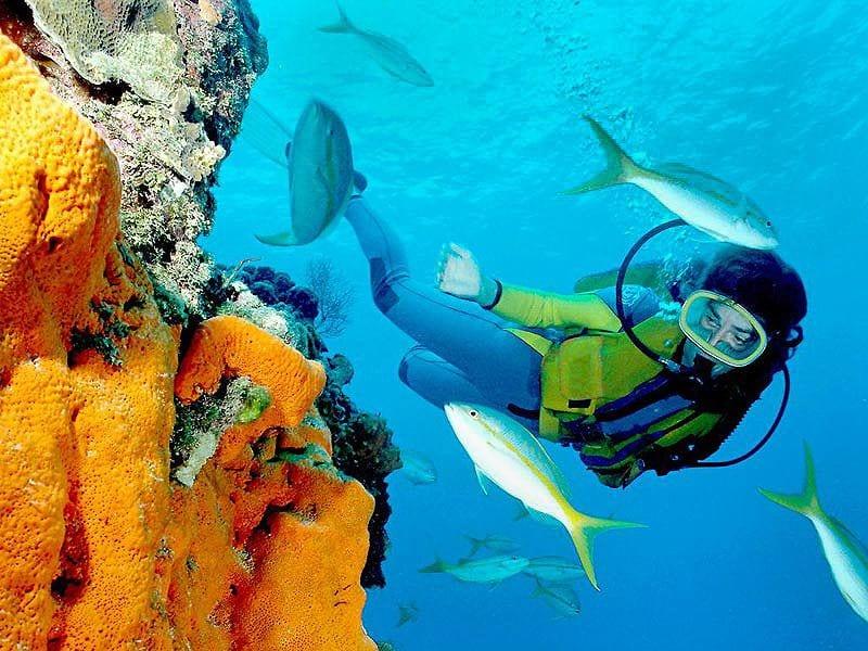 Scuba_Diver_Hawaii_Coral
