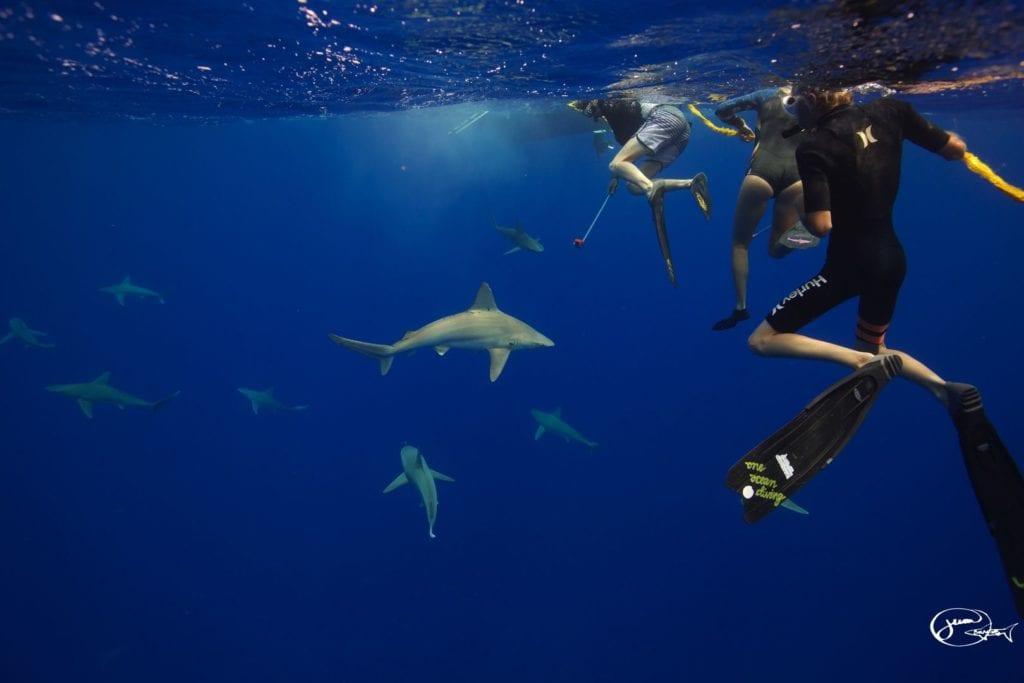 Shark-Dive
